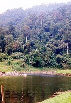 Bala - Hala Forest
