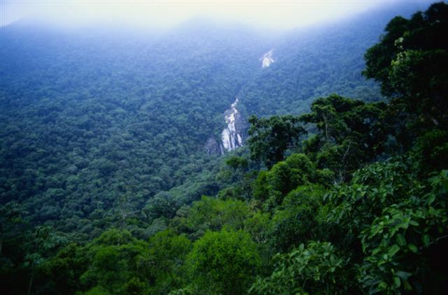 Save The Rain Forest for Our Children