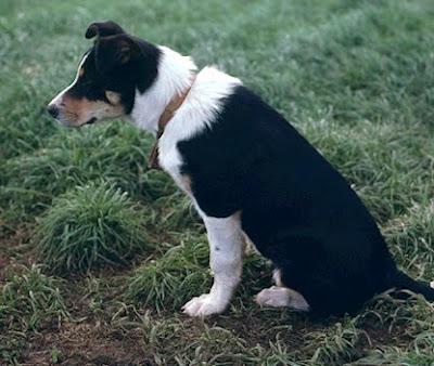Spot Farms Dog Food Dehydrated