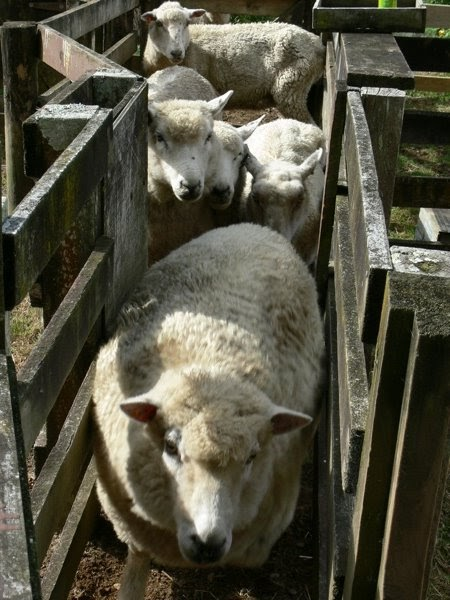 Dog Training Lamb Rd Elmira Or