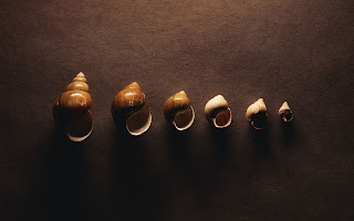 Seashells 1920×1200 Wallpapers