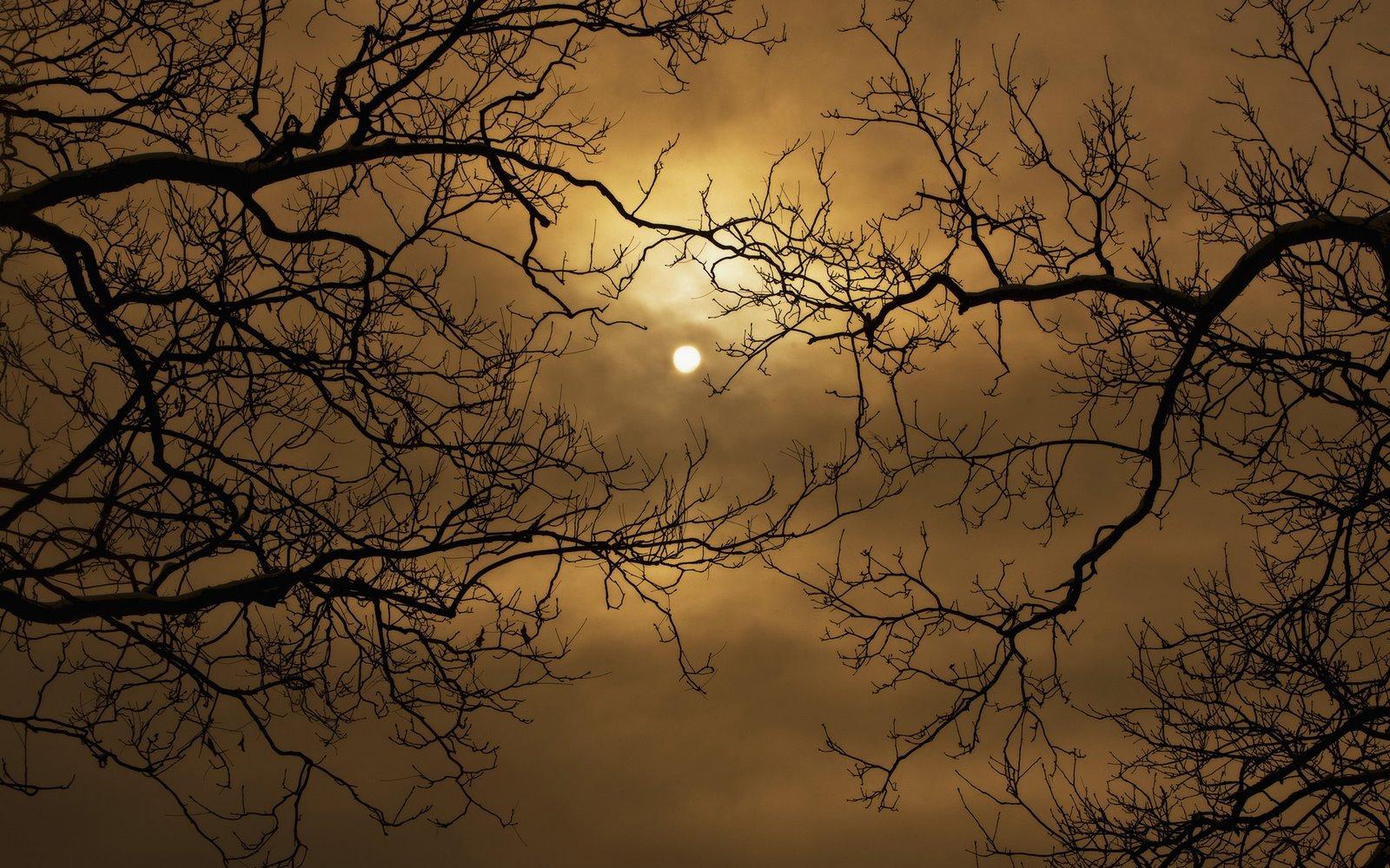 http://1.bp.blogspot.com/_W1ueYt1O3xs/TMvqaQKP2PI/AAAAAAAAW-8/SFg08OzBUxo/d/Halloween+Wallpapers+1920x1200.jpg