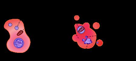 Perfil de proteases em células de carcinoma de cabeça e pescoço 3