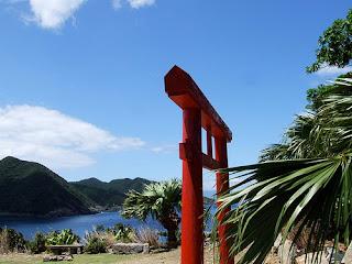 Yakushima: Among the Yakisugi