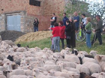 Iª FESTA DE LA TRANSHUMÀNCIA - CAUDIEL 6 DE NOVEMBRE DE 2010
