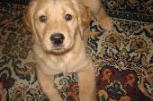 Layla says Hello!