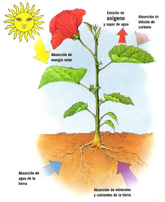 definicion planta luminosa: