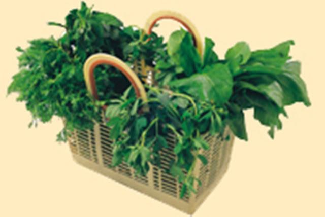 http://1.bp.blogspot.com/_W8Kxq8Ls81Q/S7Vq1tcDpwI/AAAAAAAABSE/LHwB96qSbJI/s1600/basket_greenleaves.jpg