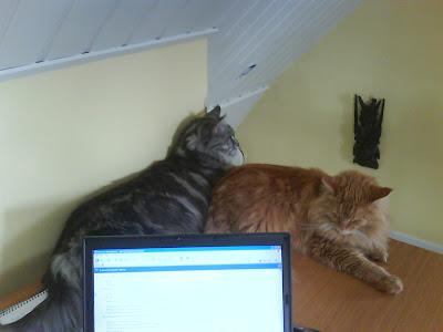 Zammy och Mille jobbar hemma