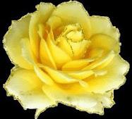ROSA ,regalo de mi amiga Lola