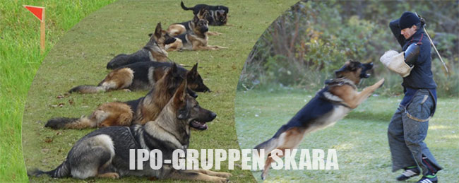 IPO gruppen Skara