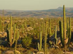 Desierto de la Baja