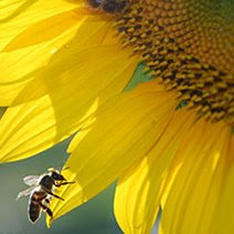 National Pollinator's Week: contest