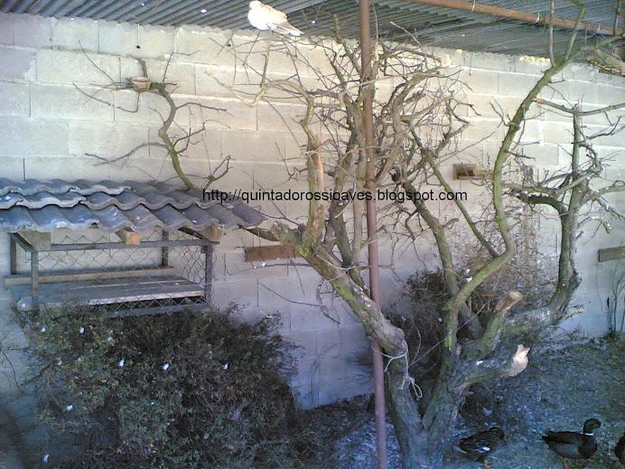 Interior de viveiro faisões e outras aves
