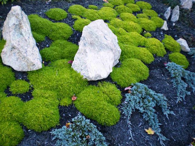la 39 botaniculture 39 la culture scientifique allier horticulture botanique et cologie plante. Black Bedroom Furniture Sets. Home Design Ideas