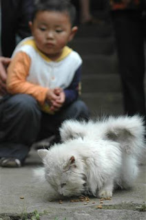 kucing aneh