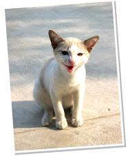 มันนี่ แมวจอมกวน