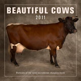 cow porn