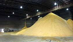 DDGS Dried Distillers Grain ethanol coproduct