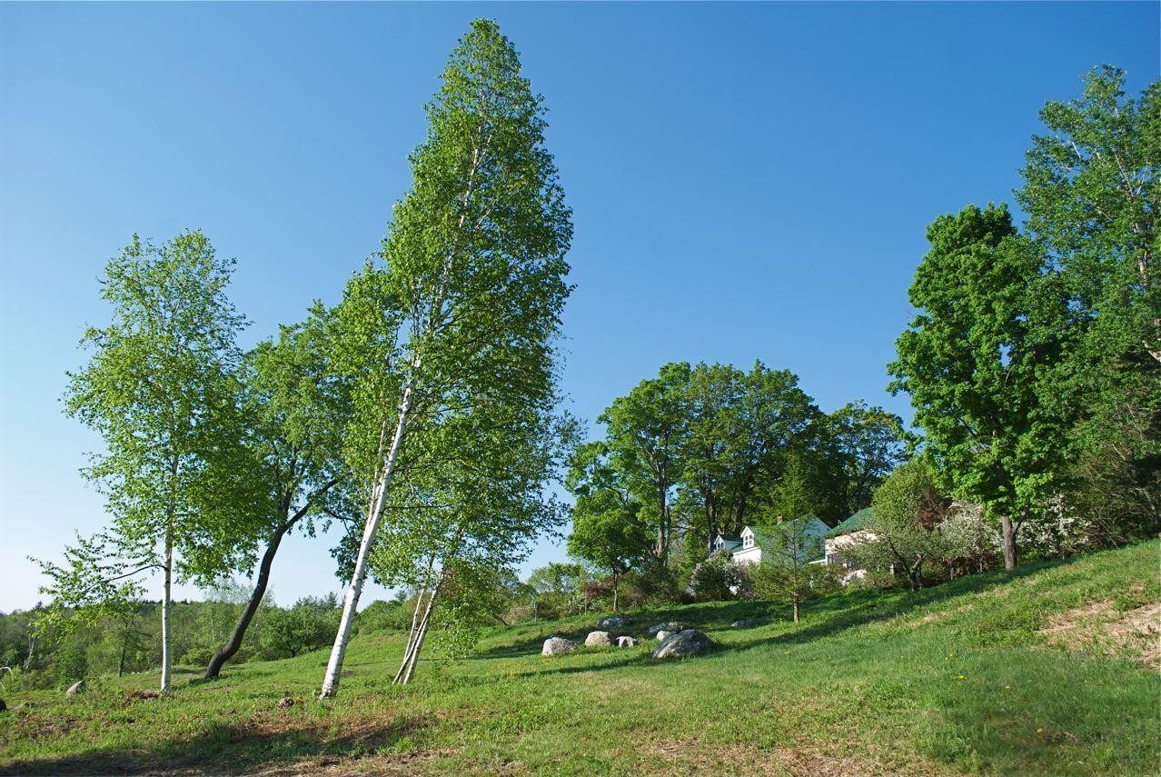 Flower hill farm returning fullness of green bedecked in for Flower hill farms