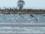 Paisaje de ambiente estuariano del río Andalién