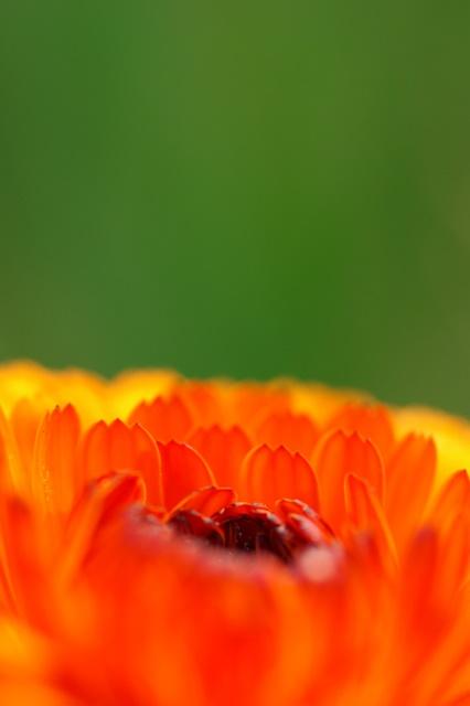 花紅柳緑(KA-KOU-RYU-RYOKU)