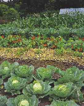 how our garden groweth!
