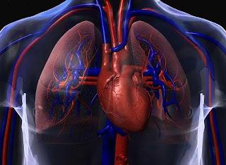 [pulmões.JPG]