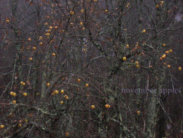 [November+apples.jpg]