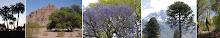 Árboles nativos argentinos
