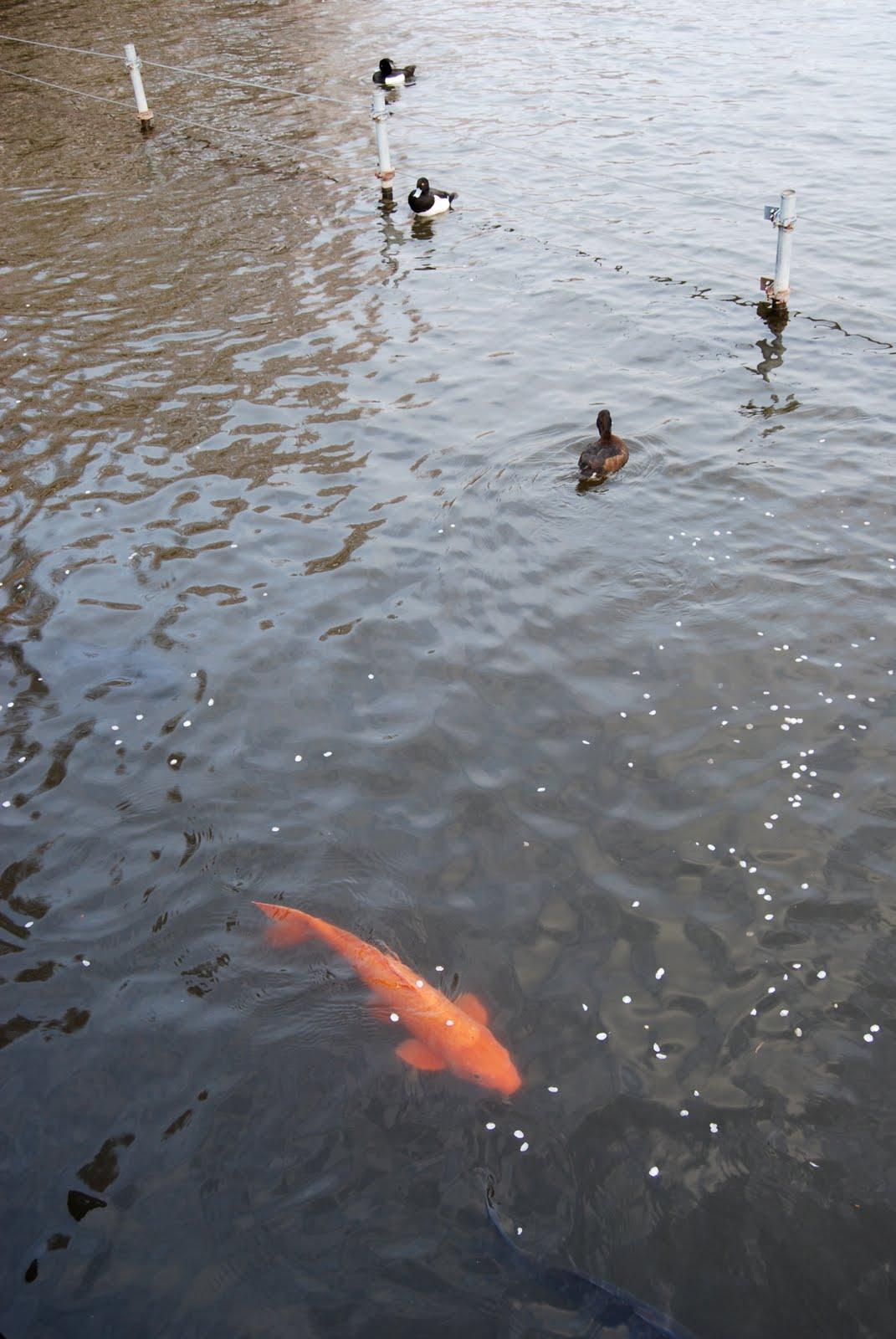Little fish big pond tokyo april 2010 for Big pond fish