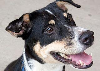Dog Adoption Agency In Altamonte Springs Fl
