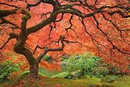 El árbol de la amistad...