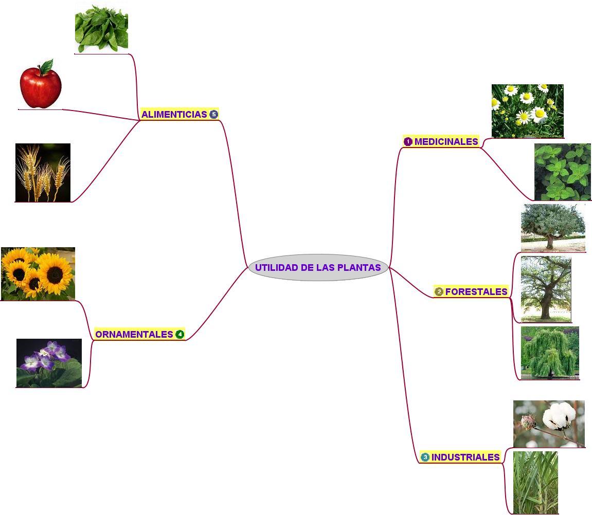 Las plantas y su utilidad for Funcion de las plantas ornamentales