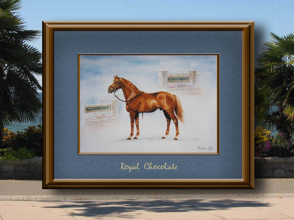 Royal Chocolate  (SOLD)