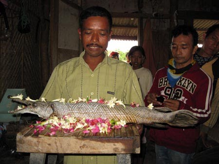 Berita Heboh  dan Unik : Ikan Berkepala Buaya