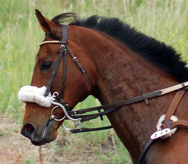 Types of Bridles and Their Uses | saddleonline.com