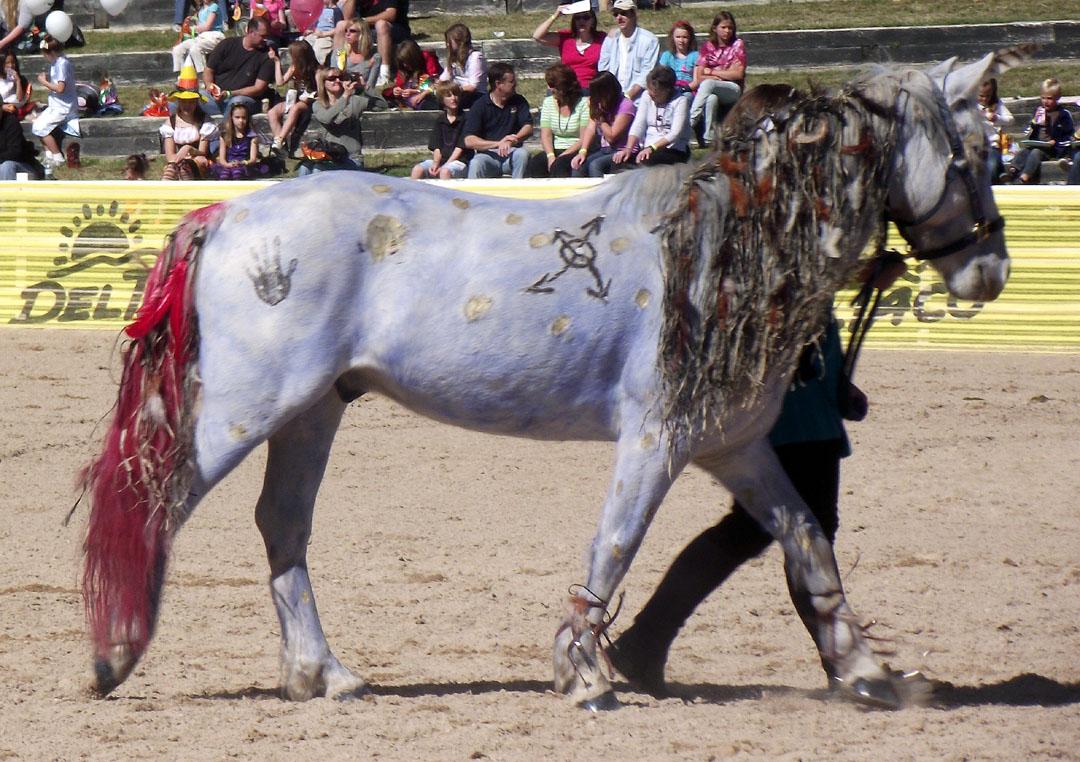 Костюм лошади
