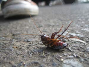 stomping cockroach