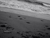 Traim prin nisip si spuma ..