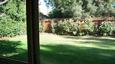 Pre-gardened backyard