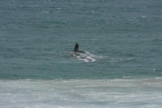 Walvis in zicht!