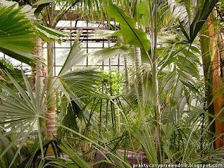Palmiarnia Ogród Botaniczny Kraków