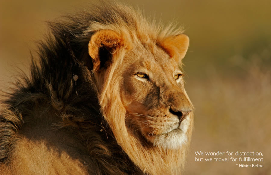 Easy Travel Amp Tours South African Wildlife
