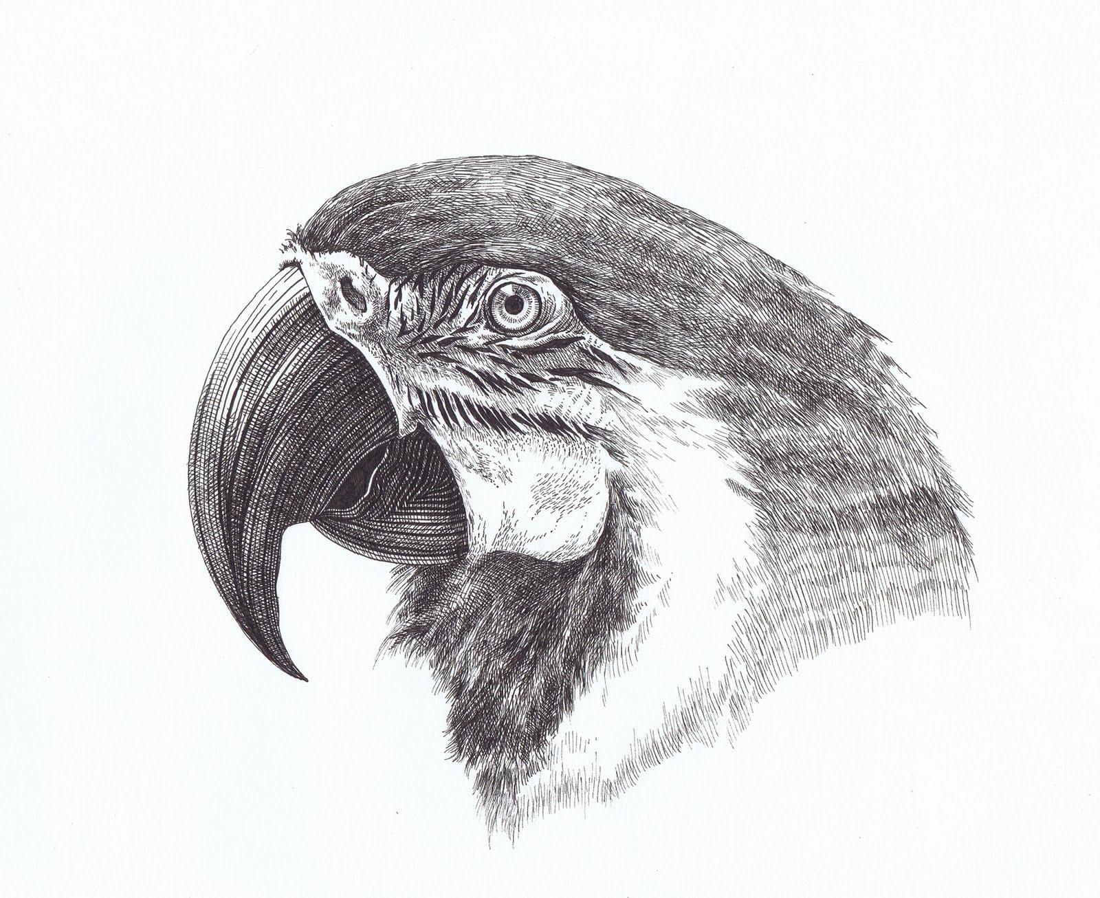 Sarah Shuhart Macaw {Bird Project 2}