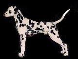 Rim Rock Dalmatians
