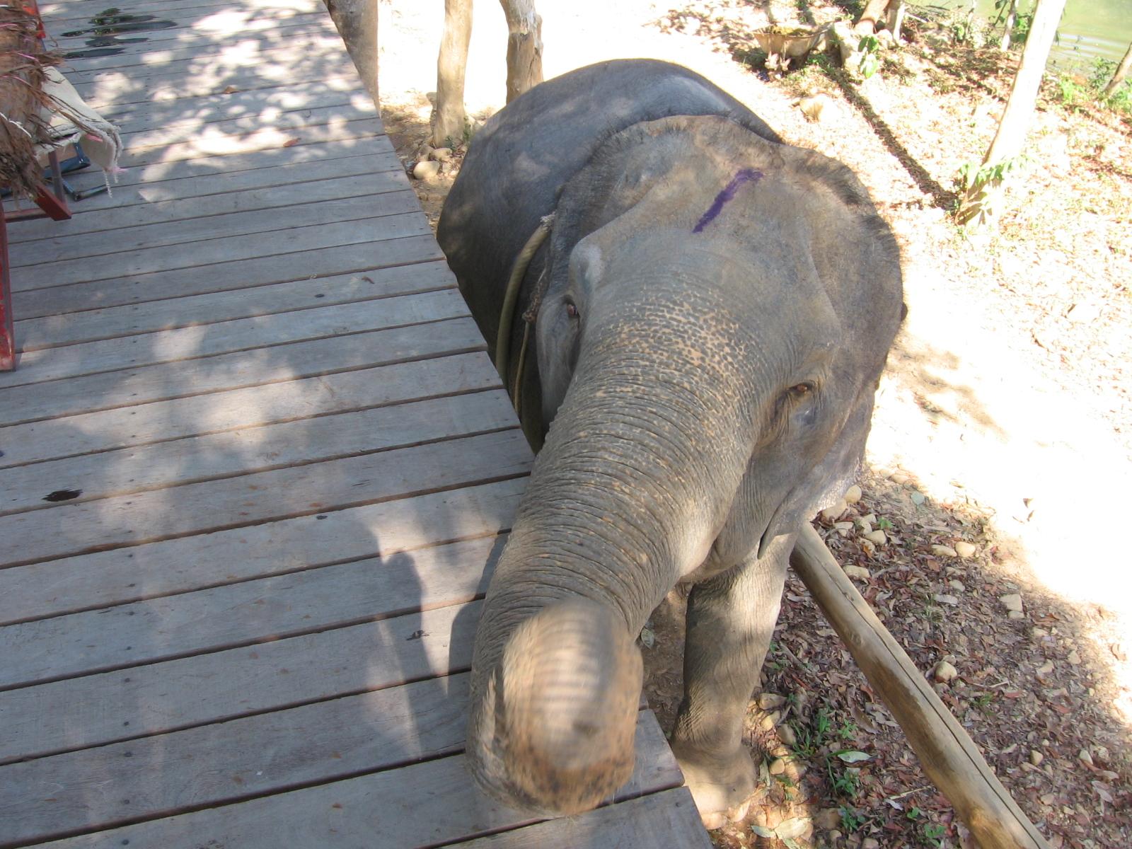Говорят что 7 слонов иметь хороший тон