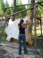dry scraping an elk hide