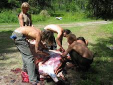 animal processing