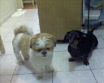 Meus cachorrinhos